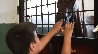 «A nivel emocional, los niños mejoran su autoestima gracias a la conexión que se establece con el caballo»